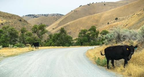 About Public Lands Ranching