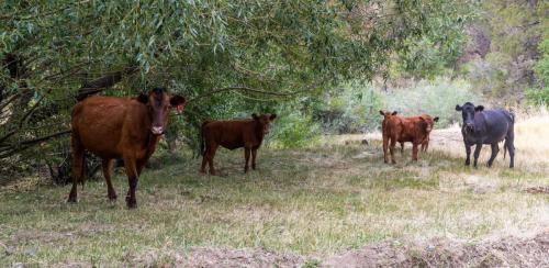 Ecological Impact of Public Lands Ranching